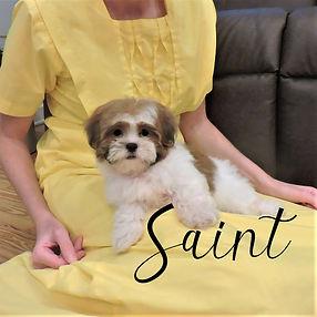 Saint4-(1).jpg