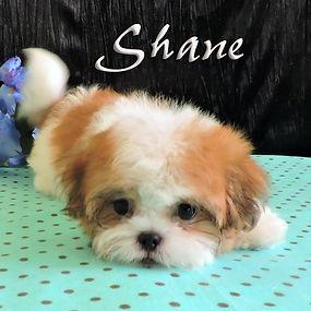 Shane ~  M ~  Malshi