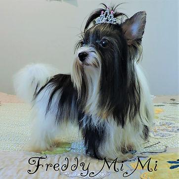 Freddy-Mi-Mi-3.jpg