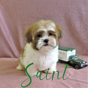 Saint ~ M ~ Malshi