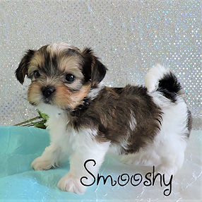 Smooshy-6.jpg