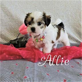 Allie-10.jpg