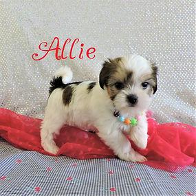 Allie-8.jpg