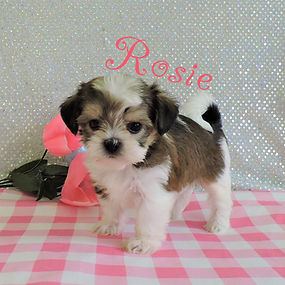 Rosie-6.jpg-7.jpg
