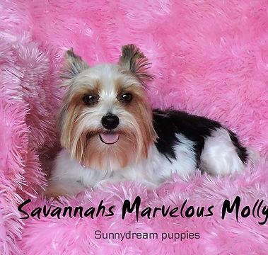 Copy of Savannahs Marvelous Molly     Bi