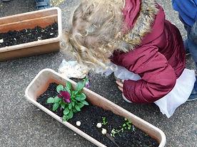 Yeladenu Muswell Hill Nursery Gardening