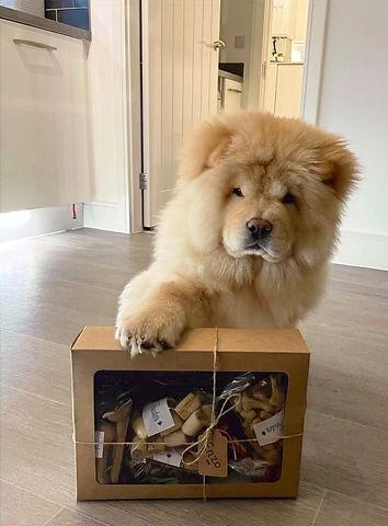 Treat Box, Chow Chow
