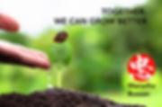 seedling-sprouting-organic-soil-thailand