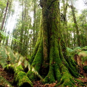 New South Wales Gondwanaland