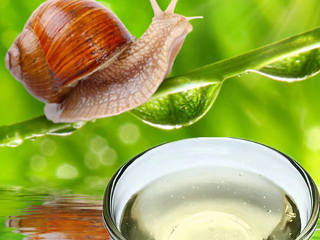 Why is Snail Mucin So Good For Your Skin? 🐌