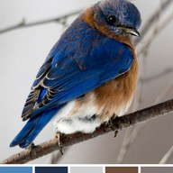 Color ideas from Bird