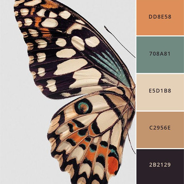 Color Ideas from Butterfly