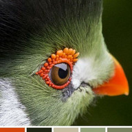 Color ideas from Nature