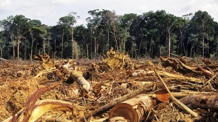 ¿Avanzando en la lucha contra el cambio climático en Colombia?