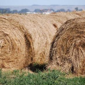 Los forrajes tras la sequía: claves para elegir la mejor fuente de fibra