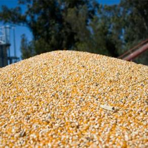Prohíben el uso de un insecticida que se usa en el almacenamiento de granos