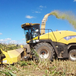 Por seca, en Córdoba 1.6 mill. de tns. de maíz y soja pasan a forraje