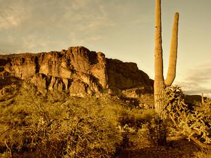 Virtual Innovation Opens New Phoenix Arizona Office
