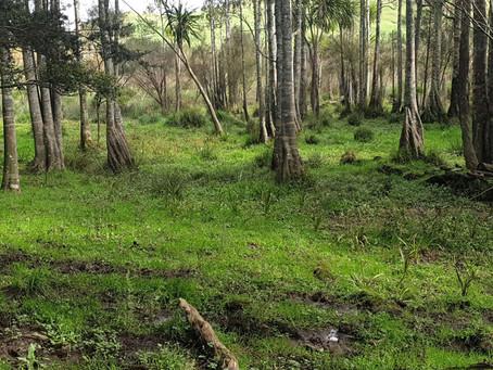 Waima Waitai Waiora Planting Update