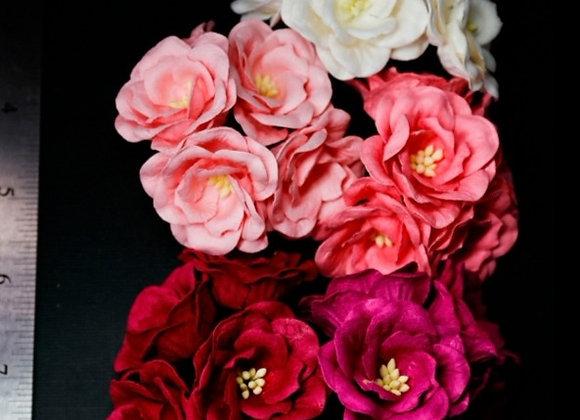 BLOOM - Magnolias - Pink