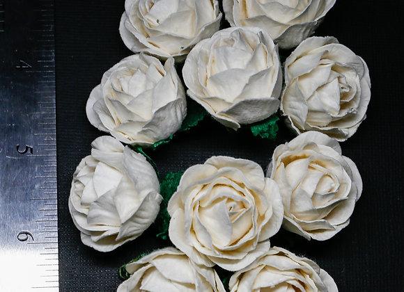 BLOOM - Peony Roses - Ivory