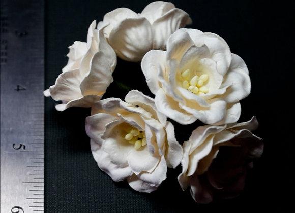 BLOOM - Magnolias - White