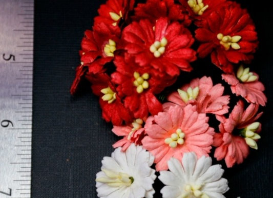 BLOOM - Cosmos - Red
