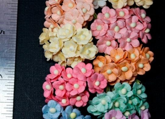BLOOM - Mini Sweethearts - Mixed
