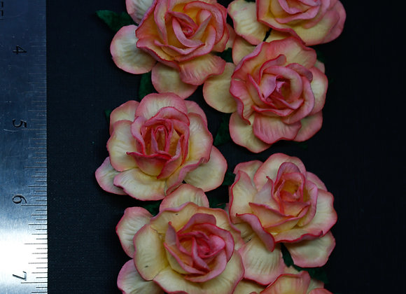 BLOOM - Country  Roses - Champagne