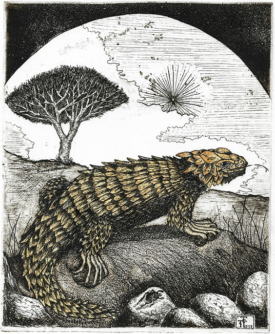 Conteslations of draco, lacerta, etching, aquatint, pantazistselios