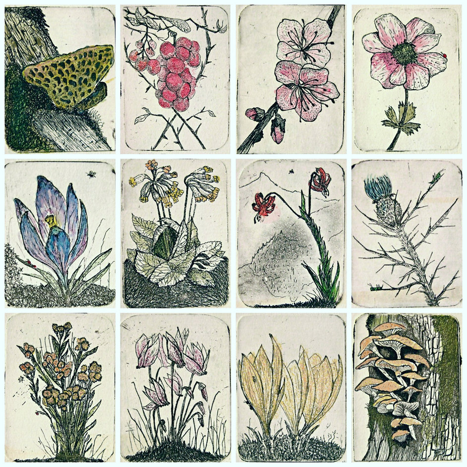 flower callendar, pantzis tselios, etching