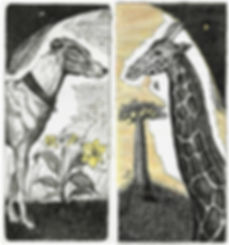 Canis major, Camilopardalis, etchings, pantazistselios