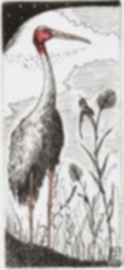 Grus, etching, pantazis tselios