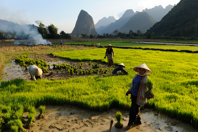 Revolution auf dem Reisfeld