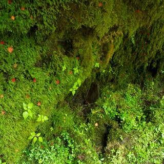 11 Susanj Introduced Species.jpg
