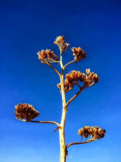 Sedona Flowers