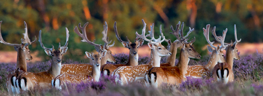 Elveden Game Management