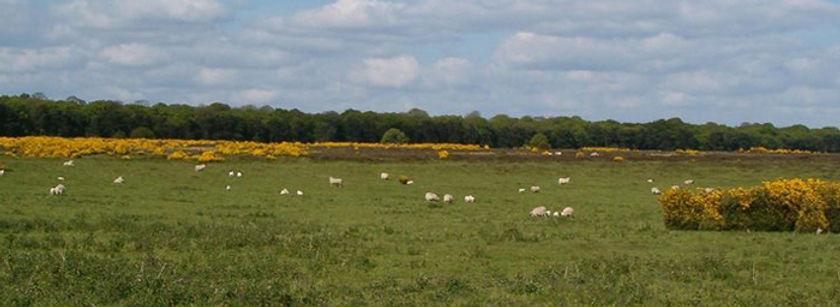 Conservation Elveden Estate