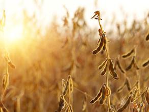 El área de siembra y la productividad, estancados. ¿Por qué será?