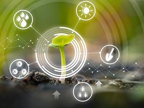 Los Cultivos de Cobertura, claves para intensificar la agricultura