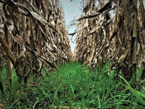 Producir Cultivos de Servicios Ecosistémicos es rentable y posible