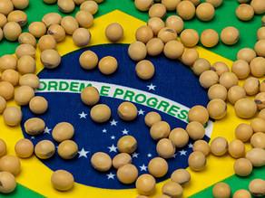 En Brasil, la Agro Industria crece en orden y progreso