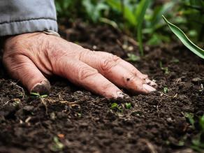 ¿Enfriamiento global? Sí… la salud del suelo puede lograrlo.