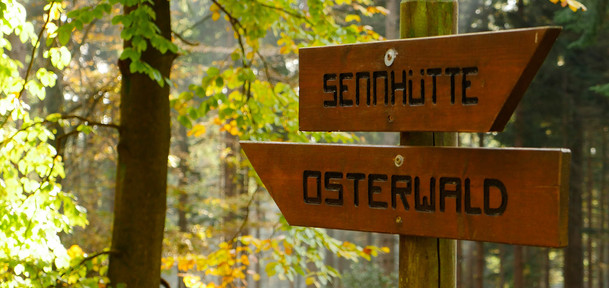 kopfbild_osterwald-wald-wanderschild.jpg