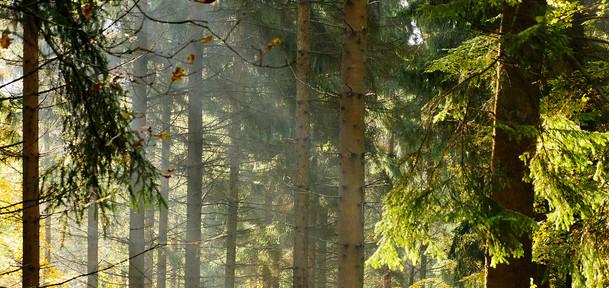 kopfbild_osterwald-wald-licht-2.jpg