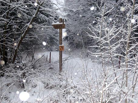 Osterwald im Schnee