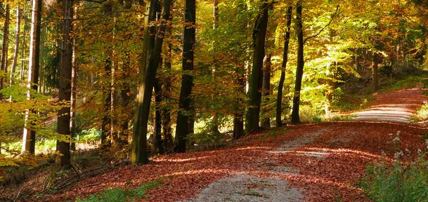 kopfbild-osterwald-wald-weg.jpg