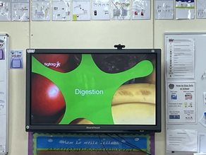 Year 4's Digestive System
