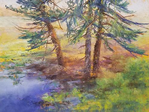 Pine Tree Trilogy