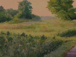 Songbird Field